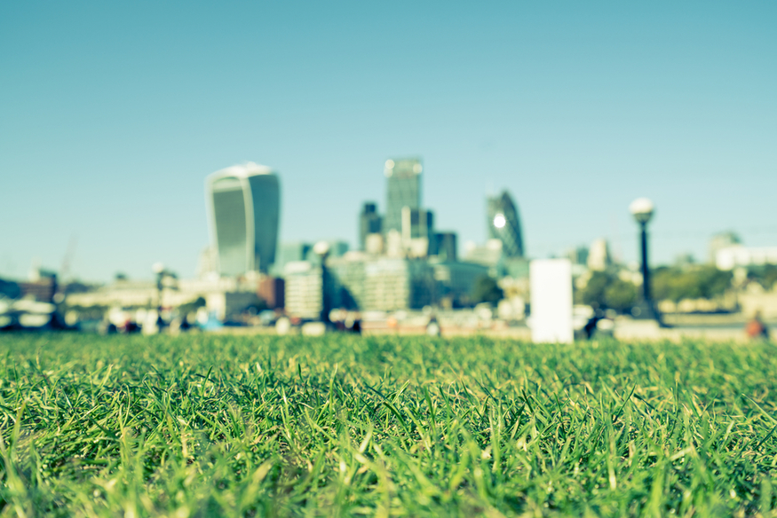 City of London over a lawn