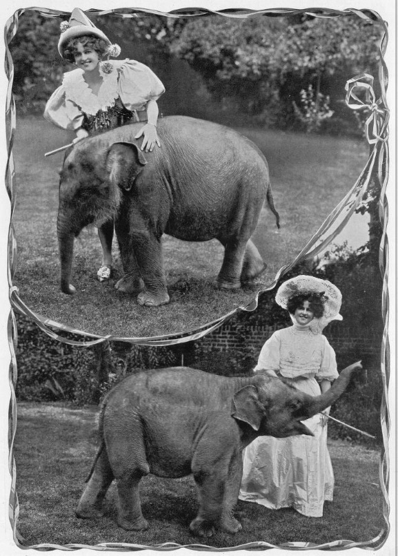 Elephant and actress