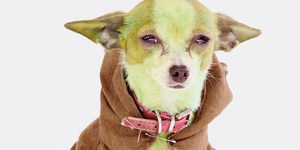Sci-Fido! Get Your Dog Ready For Canine Cosplay