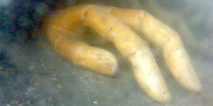 Seen This Mysterious Hand At The Tower Of London? No One Knows What It Is