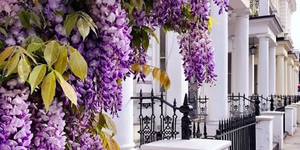 Wisteria Hysteria Season Has Arrived In London - Check Out These Bloomin' Lovely Photos