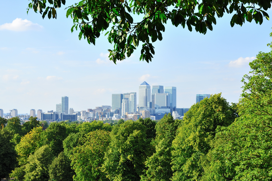 Canary Wharf up a tree