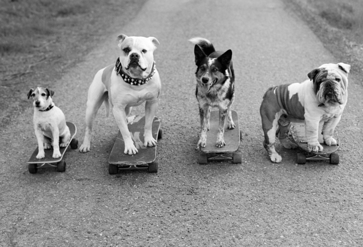 Dogs on skateboards