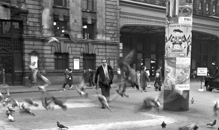 Fascinating Photos Show London's Pigeons Through The Years