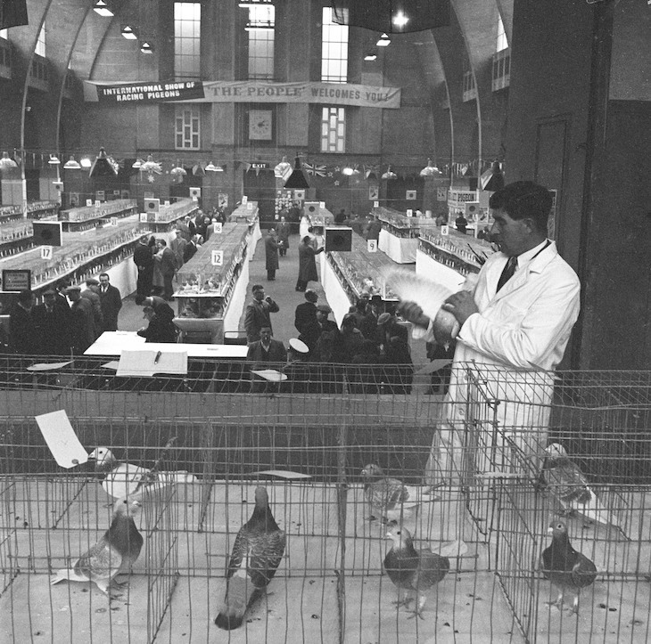 Fascinating Photos Show London's Pigeons Through The Years | Londonist