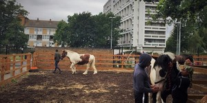 Kids Are Going Horse Riding In Brixton... And It's Improving Their Lives