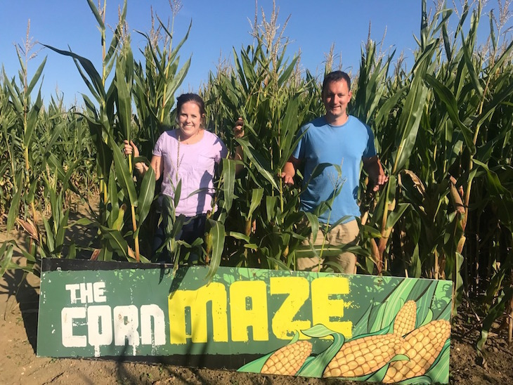 mazes, maize mazes, hedge mazes near london for a day trip: the essex corn maze at colchester and basildon