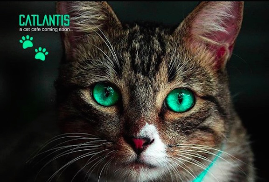 Christmas In July Cat Meme.Catlantis The Pawsome New Cat Cafe Opening In London