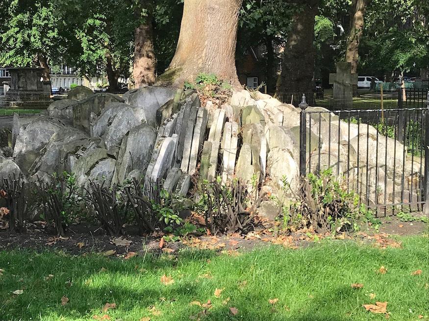 Base of the Hardy Tree
