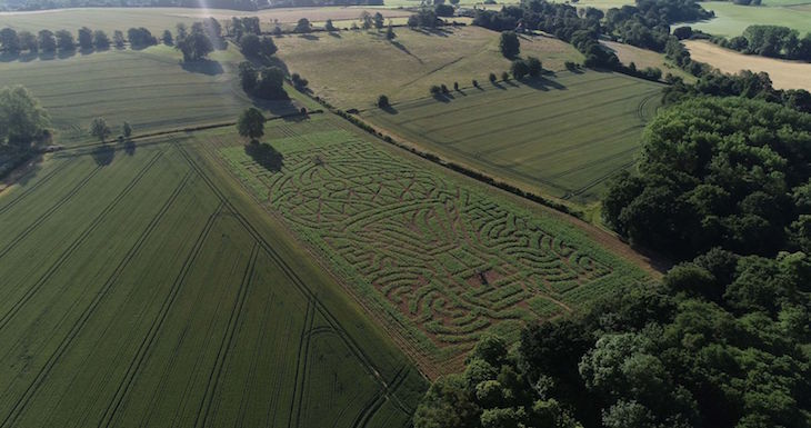 mazes, maize mazes, hedge mazes near london for a day trip: maize maze at penshurst place in kent
