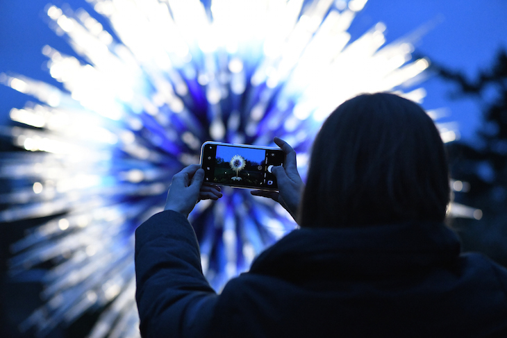 Someone taking a photo of Sapphire Star by Dale Chihuly glass sculpture at Chihuly Nights at Kew Gardens