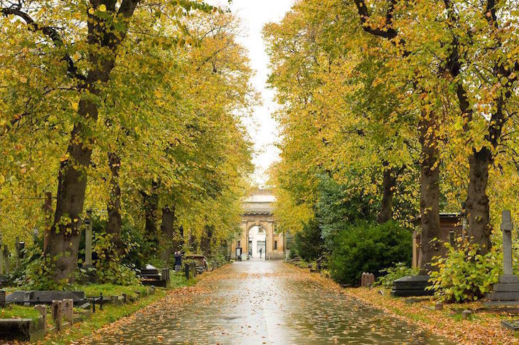Yellow leaves on trees in Brompton Cemetery, London, in autumn