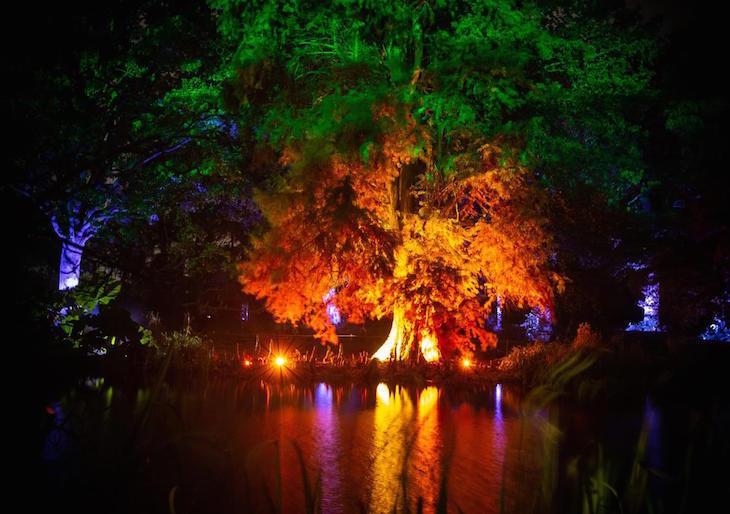 Illuminated trees at Syon Park Enchanted Woodland Christmas/winter 2019 light festival London
