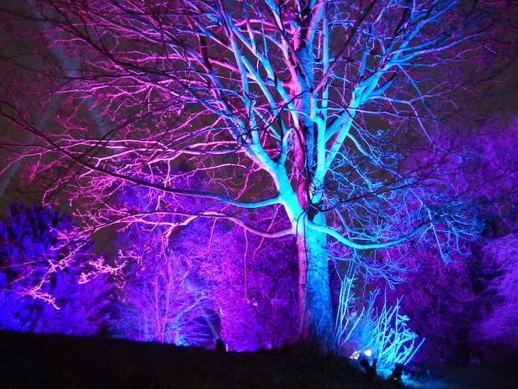 Light festival Enchanted Eltham in the grounds of Eltham Palace