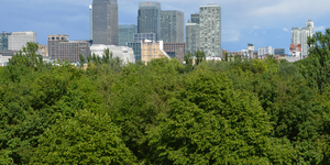 55,000 Trees To Be Given To Londoners For Free