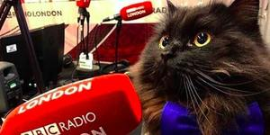 This Celebrity Cat Is Bringing Joy To Hospitals Across London