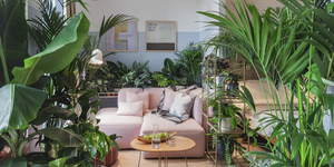 Leaf It Out! London Hotel Unveils Houseplant-Themed Suites
