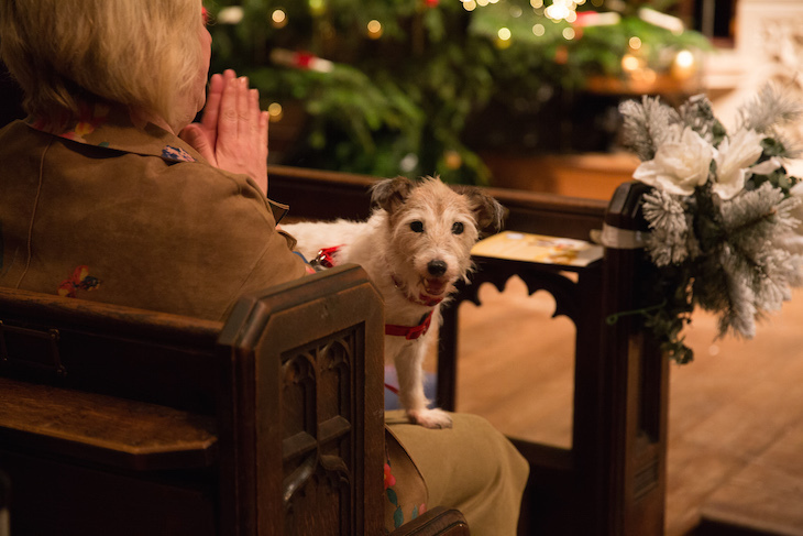 Dogs in church at the Battersea Dogs and Cats Home Christmas carol service