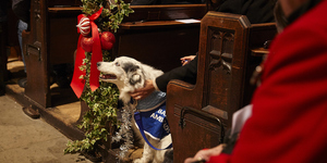 Dogs Are Allowed Into Church For Battersea's Barking Mad Carol Concert