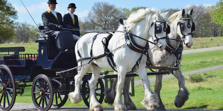 Hose drawn carriage ride in Richmond Park