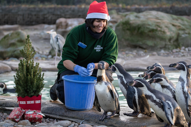 Where to watch Christmas 2019 films in London: Festive Films at ZSL London Zoo