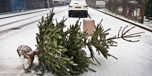 Where To Recycle Or Dispose Of Your 2019 Christmas Tree In London
