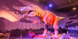 'New World-Class Dinosaur Gallery' Coming To Natural History Museum