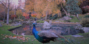 London By Bike: St James's Park To Kyoto Garden