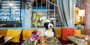 Dine With Your Dog At Hello Darling This March