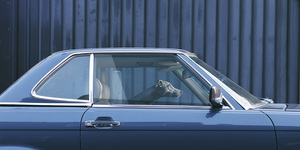 These Photos Of Dogs In Cars Will Absolutely Break Your Heart