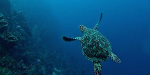 From Sea Turtles To Micro-Plastics, Royal Geographical Society Is Streaming Fascinating Talks For Free
