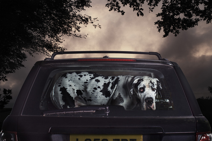 Dog in the boot of a car
