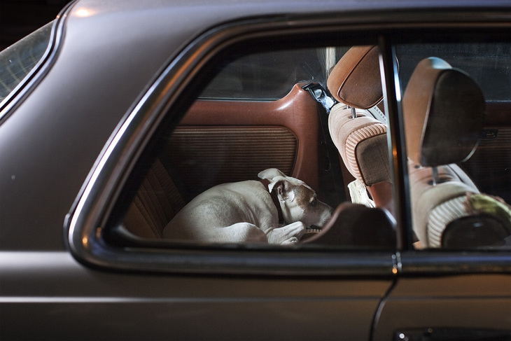 Dog curled up in the back of  a car