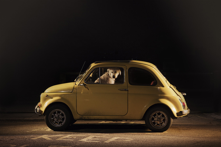 Dog in a bright yellow car
