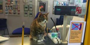 Bronze Statue For Famous Cat At Penge East Station?