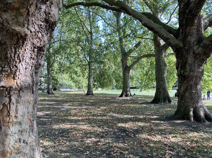 Ring of plane trees