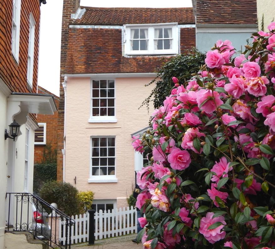 A pastel pink house behind a camellia bush on Frog Lane in Tunbridge Wells, Kent