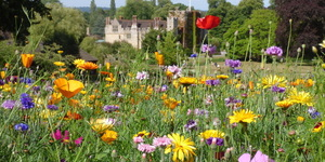 History, Topiary, Beauty: Why You Should Visit Hever Castle
