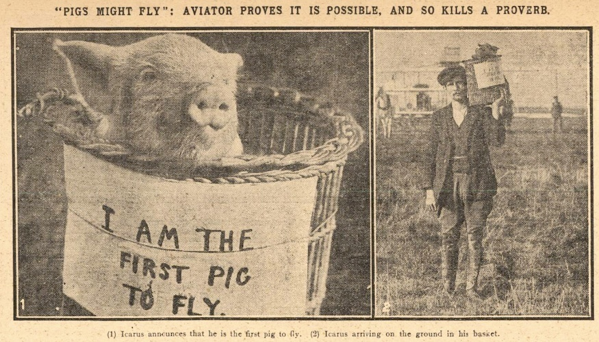 A pig sat in a basket with a label saying it is the first pig to fly. In a second view, a man is shown holding the basket on his shoulder on an airfield.